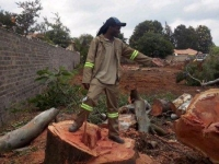 professional-tree-felling-04