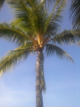 Palm Tree Cleaning